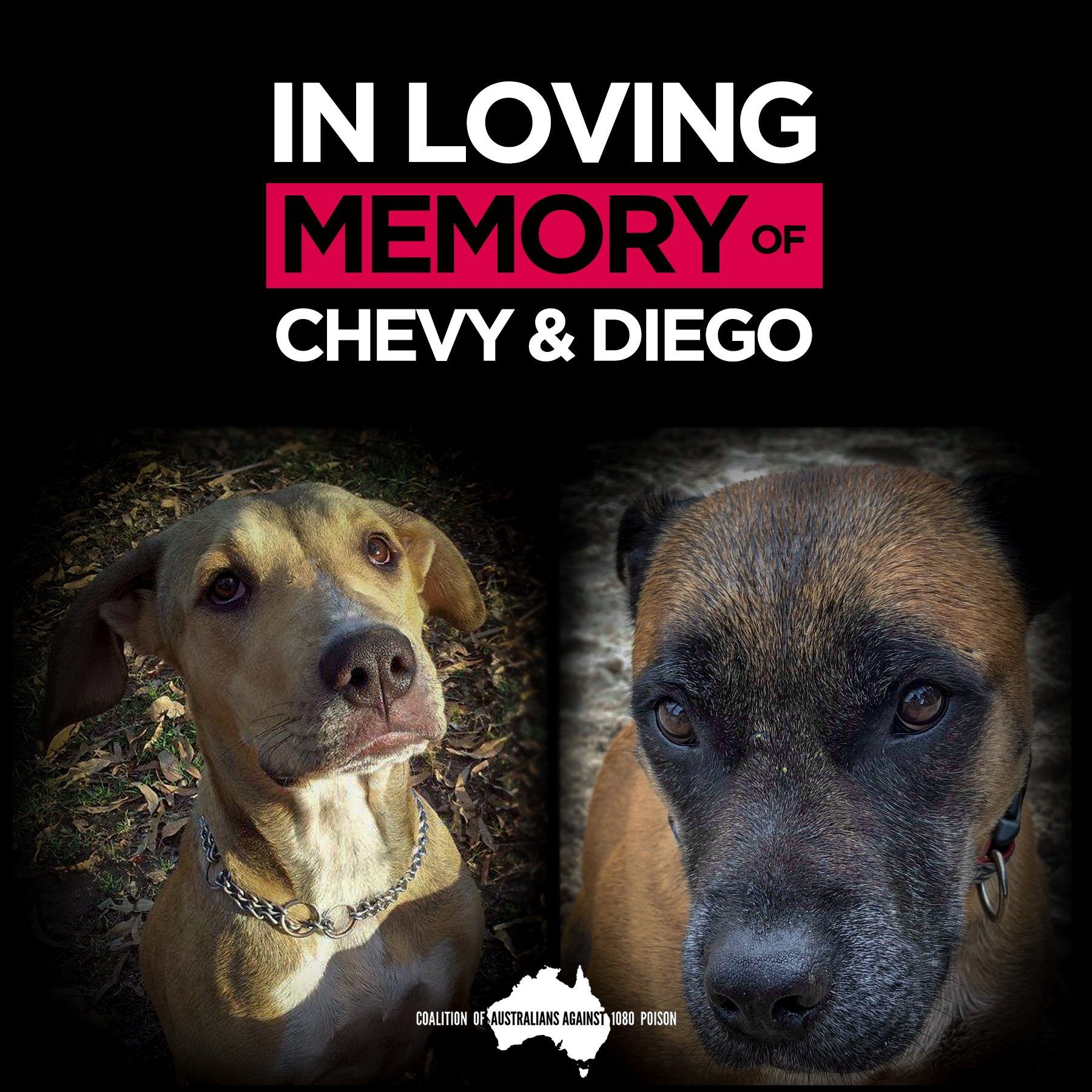 Chevy and Diego's Story