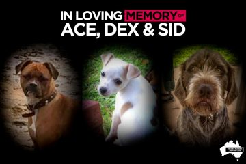 Ace, Dex, Sid's Story